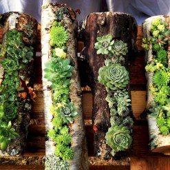 Ideas to arrange your succulent with driftwood 25
